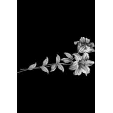 Купить Гравировка цветы gravfl2 - Минск, Бобруйск