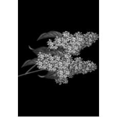 Купить Гравировка цветы gravfl5 - Минск, Бобруйск