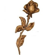 Роза roza6